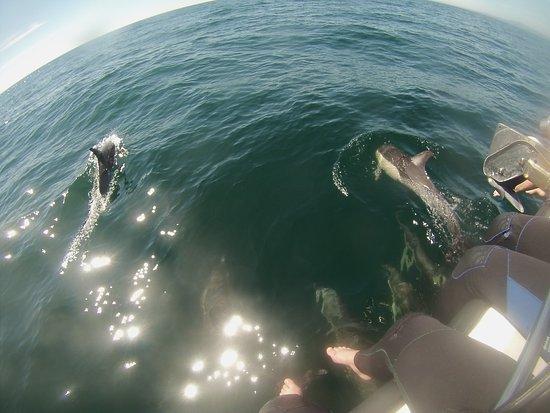 Mount Maunganui, Nova Zelândia: Dolphin Pod - November 2016 - Aprox 80 Dolphins