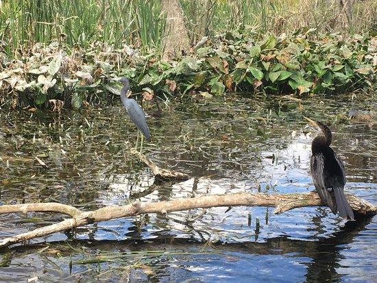Silver Springs, FL: More Birds