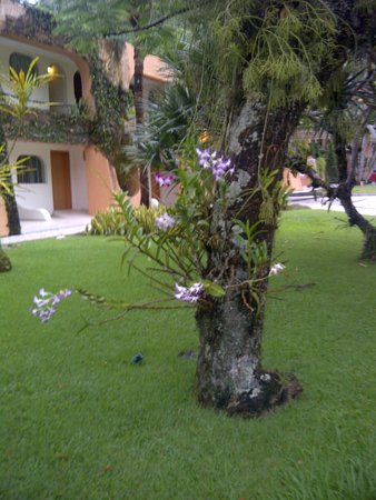 Itapemar Hotel: Tree with orchids growing on it.