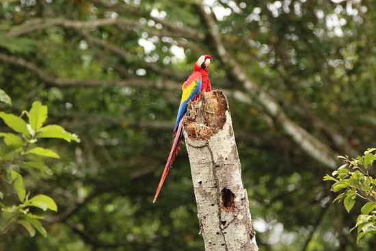 Hotel Villa Lapas: Nice views of Scarlet Macaws from the hotel grounds