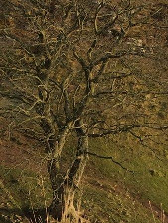 Northumberland National Park, UK: photo1.jpg