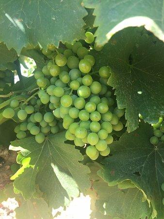 Nederburg Wines: photo5.jpg