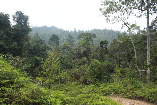 Sinharaja Forest Reserve: Forest Overview