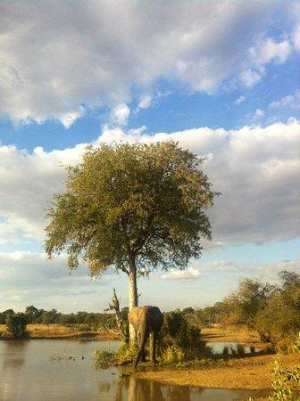 Timbavati Private Nature Reserve, Güney Afrika: Umlani Bushcamp