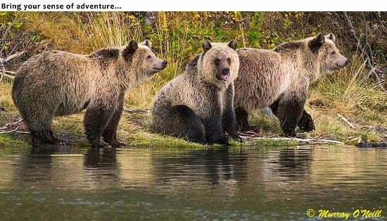 Landscape - Picture of The Chilko Experience Wilderness Resort, British Columbia - Tripadvisor