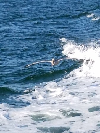 Dolphin deep sea fishing tarpon springs fl anmeldelser for Dolphin deep sea fishing