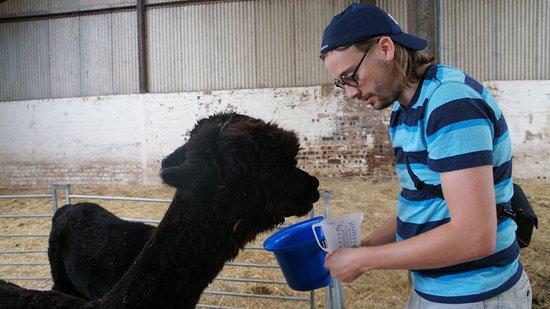 Kippen, UK: Feeding Otis and Blue.
