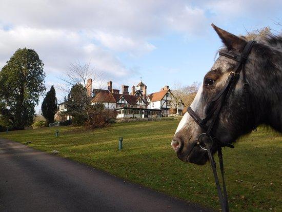 Lyndhurst, UK: Bob the horse on a short break