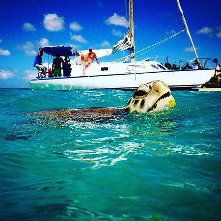 St. James, Barbados: Sin-Bad Sailing Day Cruises