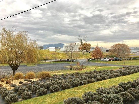 Harrisonburg, Virginie : photo6.jpg