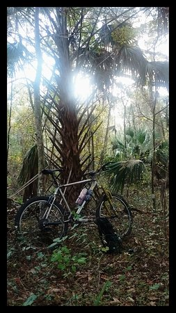 Santos - Belleview Trail: A Mountain bike December to Remember!