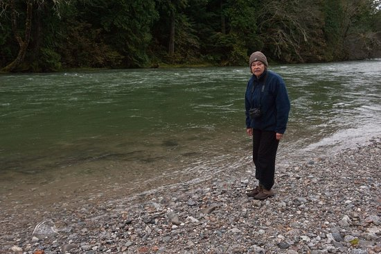 North Cascades Highway: Thousands of salmon swimming upstream