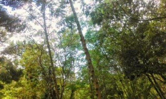 Parque municipal de Maceio: natureza