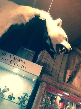 Wendake, Kanada: Ours enpaillé