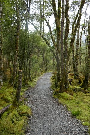 Milford Track: Stunning beauty on the track