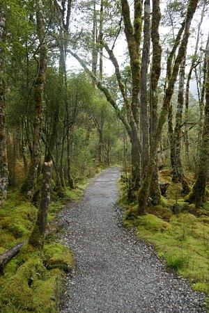 Fiordland National Park, Nieuw-Zeeland: Stunning beauty on the track