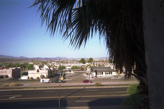 Quality Inn & Suites: Big palm tree outside room.