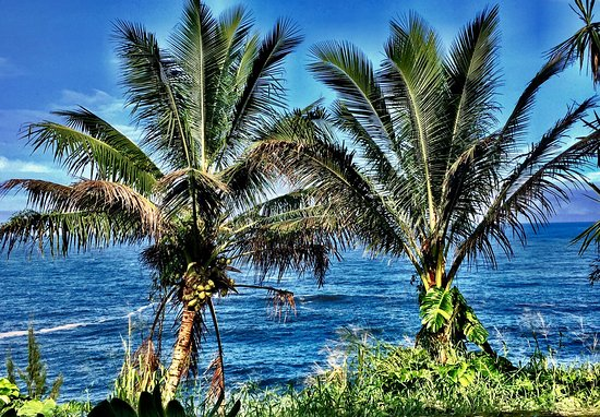 Honomu, Hawaï: photo1.jpg