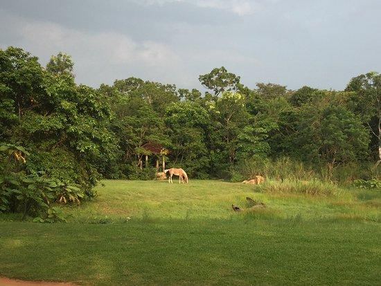 Thirappane, Sri Lanka: photo2.jpg