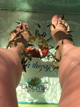 Coxen Hole, Honduras : Padrisima experiencia!!! Personal muy amable, limpieza!!! Nos divertimos mucho