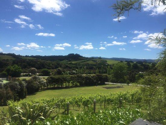 Matakana, Nueva Zelanda: photo1.jpg