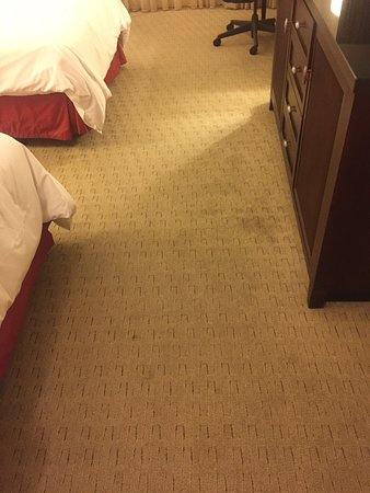 Hilton Garden Inn Tampa Airport Westshore: photo0.jpg