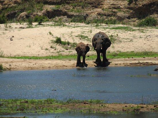 Hazyview, Sudáfrica: Thirsty Elephants