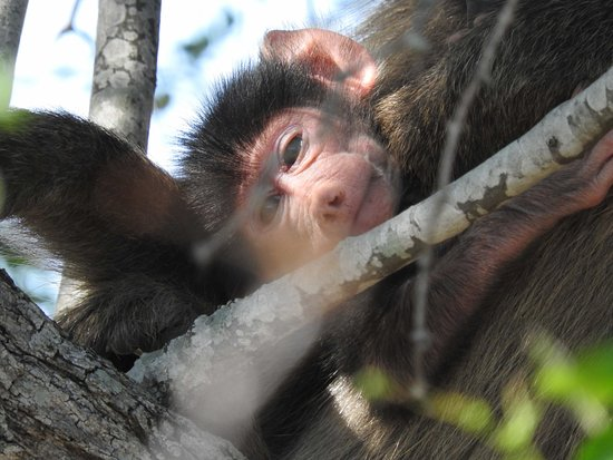 Hazyview, África do Sul: Spring has sprung with babies in the park