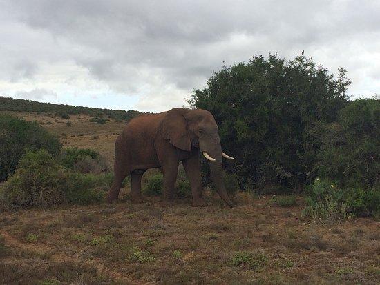 Amakhala Game Reserve, África do Sul: photo1.jpg