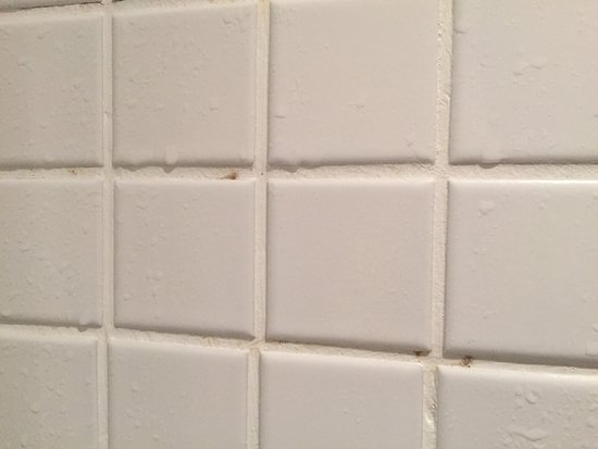 schimmel in der dusche picture of h 39 otello h 39 09 munich tripadvisor. Black Bedroom Furniture Sets. Home Design Ideas