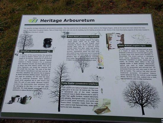 Сент-Катаринс, Канада: A tiny arbouretum, but it is a beginning