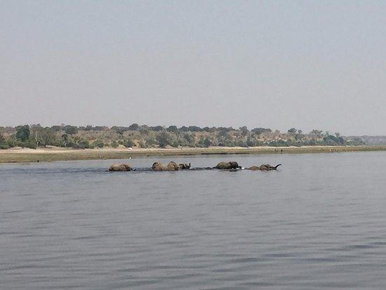 Kasane, Botsuana: Chobe River Boat Cruises