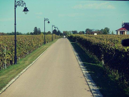 Winery Zvonko Bogdan, Subotica: view