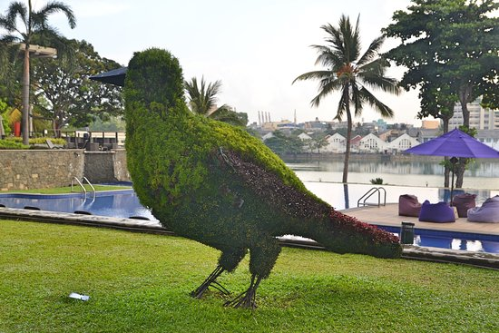 Cinnamon Lakeside Colombo: Closer view of the 'bird'