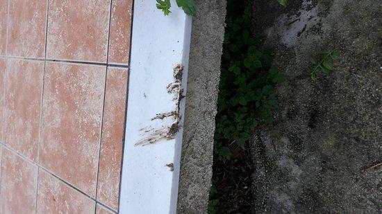 Литакия, Греция: Porto Koukla Beach Hotel