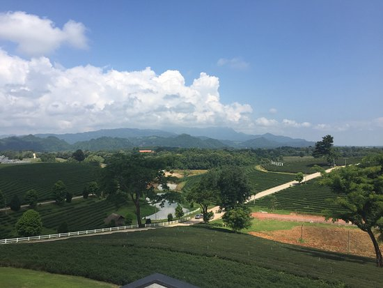 Mae Chan, Thailand: Choui Fong Tea Plantation