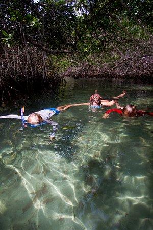 Kralendijk, Bonaire: Snorkeling in the Mangroves