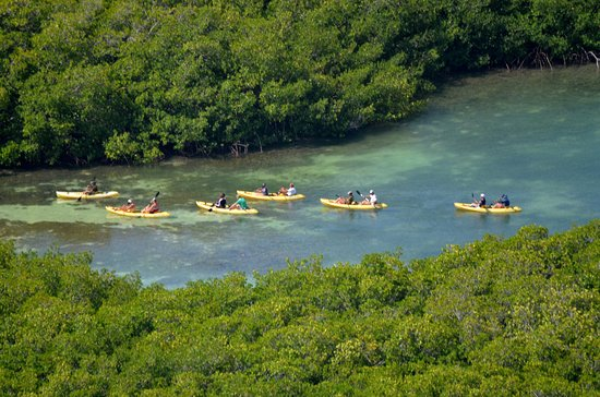 Mangrove Information Center Kayak & Snorkel Excursions