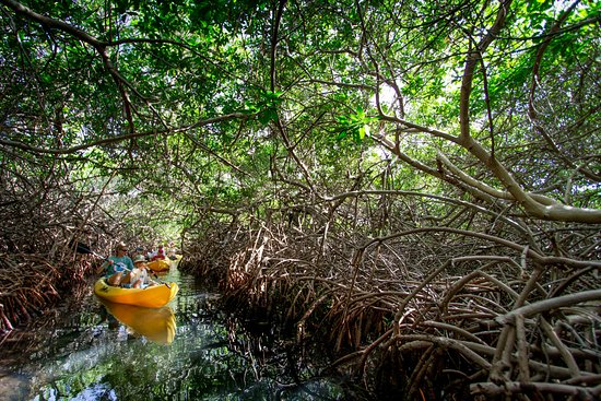 Kralendijk, Bonaire: 'Creek di CoCo'