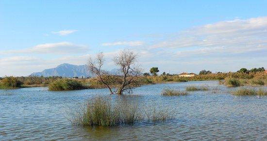 Crevillente, Spain: Zona inundada