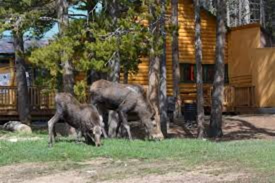 Arrowhead Lodge: getlstd_property_photo
