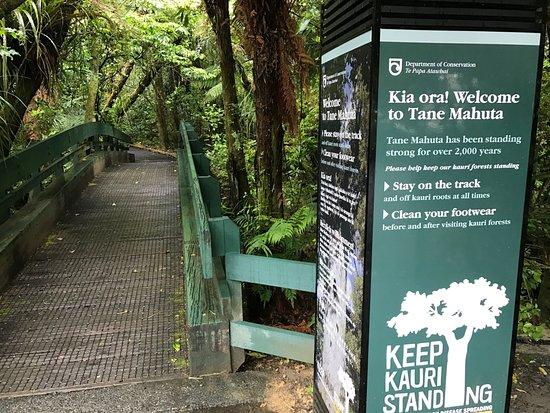 Waipoua Forest, Nueva Zelanda: trail head to Tane Mahuta