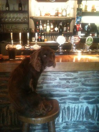 Kingsbridge, UK: Rufio enjoying the Tower Inn bar before it gets busy.