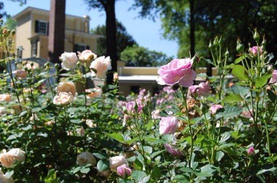 Union, NJ: Rose Garden