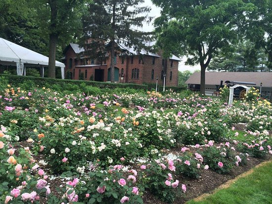 Union, NJ: Rose garden