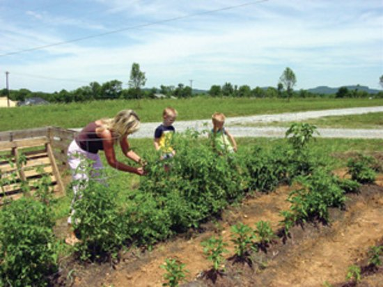 Lascassas, TN : Organic garden in season