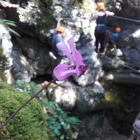 Bovec, Slovenië: Adventure Park Srnica