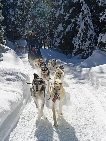 Sun Peaks, Canada: Guest have the opportunity to take control of the Dog Sled!