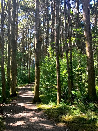 ‪‪Kerikeri‬, نيوزيلندا: Walking Trail‬