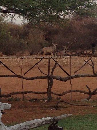 Ghanzi, Botswana: photo0.jpg